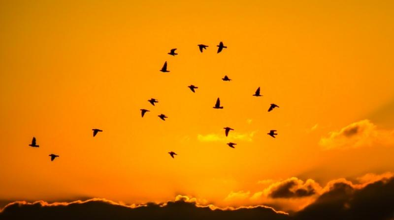 Birds have been captivated for people's fascination for ages (Photo: Pixabay)