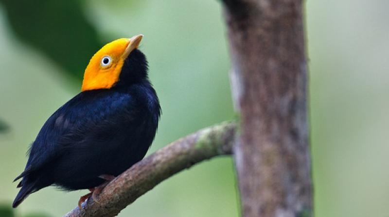 Hybrid species among vertebrates are exceedingly rare. (Photo: Pinterest)