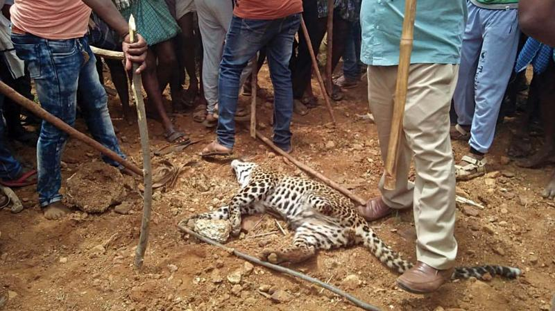 Villagers with the leopardess  they killed  after it strayed into a plantation in Hosadurga taluk of Chitradurga on Wednesday.  (KPN)