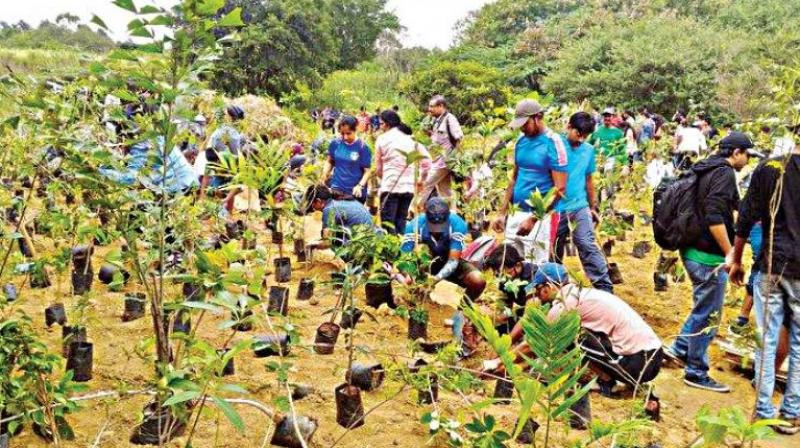 andhra pradesh plantation drive to increase green cover