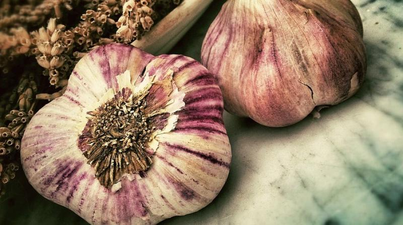 Researchers find how garlic could help tackle chronic infections