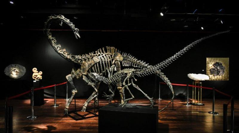 Dinosaur bones are increasingly gracing collectors' cabinets, with another huge skeleton, that of a theropod, expected to fetch up to 1.5 million euros ($1.84 million) when it goes up for auction in June. (Photo: AFP)