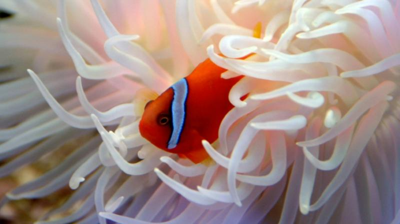 Under 2C of warming coral, and the vital ecosystems it supports, would be virtually wiped out. (Photo: AFP)