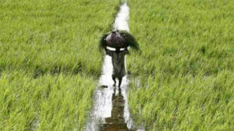 The state government is yet to pay Rs 13,000 crore towards farmer loan waiver, which is more than 50 per cent of the amount announced by the government.