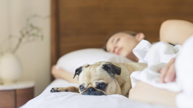 Study found that in patients with insomnia, daytime bright light exposure improved sleep quality and duration. It also reduced the time it took to fall asleep by 83 per cent. (Photo: Pexels)