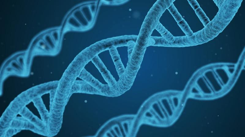 Researchers from University of Rochester in the US analysed the activity of the KRAS, CDKN2A, SMAD4, and TP53 genes. (Photo: Pixabay)