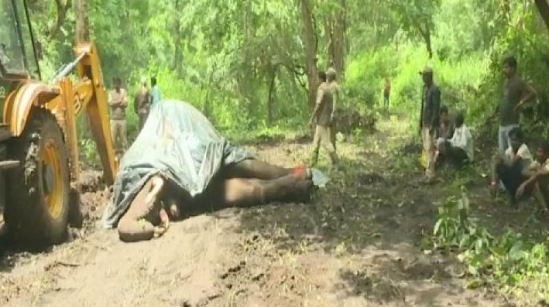 The death of the elephant has created a stir among the camp's mahouts as authorities have not yet ascertained the cause of death.  (Photo: ANI)