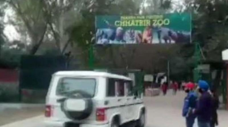 Man mauled to death by 2 lions in Punjab zoo, cops probe how he entered enclosure
