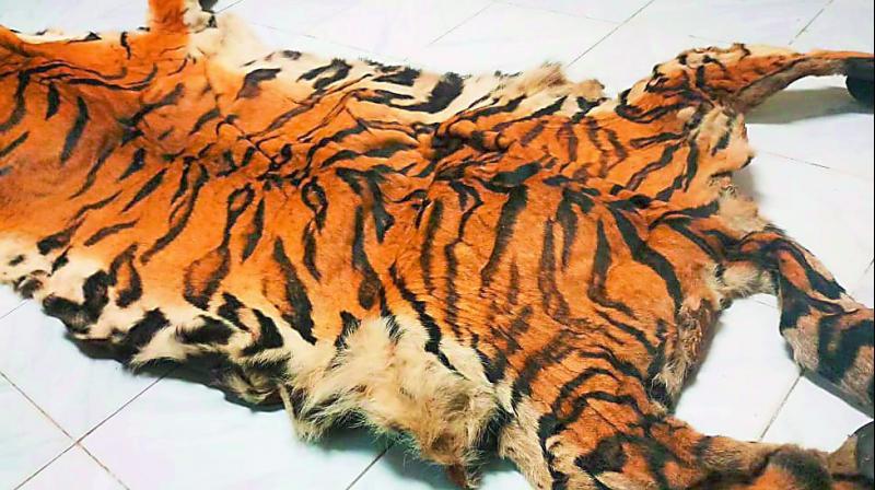 hyderabad tiger last seen in november 2017