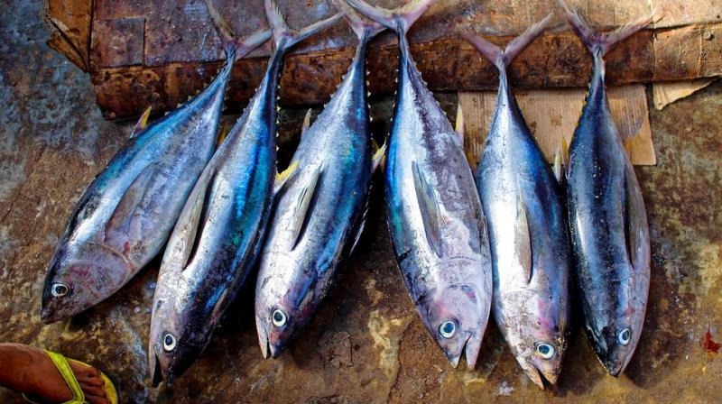 eating oily fish reduces risk of premature birth for