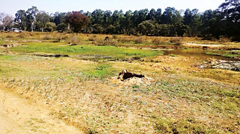 Before pictures of rejuvenation work at Vabasandra Lake at Bommasandra. (Photo:DC)