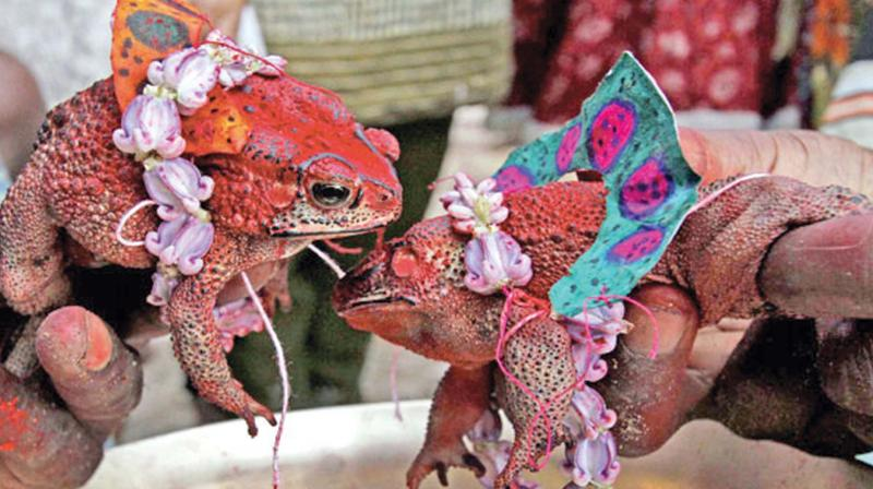 Self mutilation by the devotees is regarded as an apology for their wrongdoings or sins.