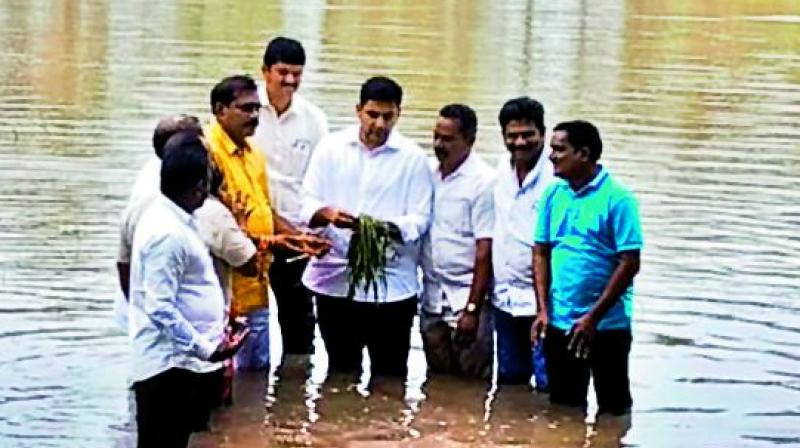 MLC Nara Lokesh takes a look at the damaged paddy crop at Penumantra during his visit to flood-hit areas in West Godavari on Wednesday. 	(DC)