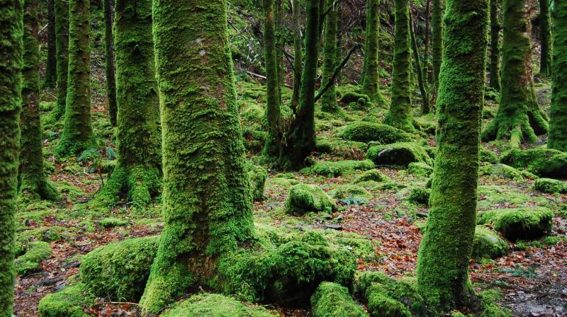 Eating moss can have various health benefits. (Photo: Pexels)