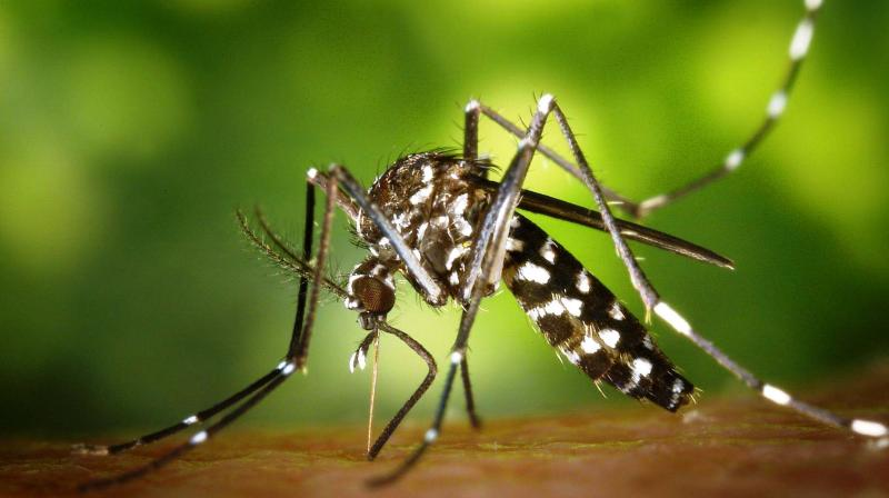 Climate change is not the only or even the main factor driving the increase in vector-borne diseases across the globe. (Photo: Representational/Pexels)