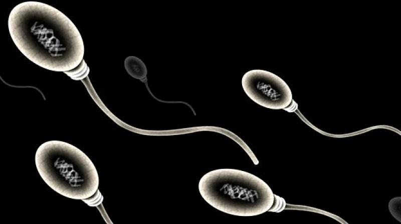 The stress of ageing can cause damage to sperm which can lead to a decrease in sperm count and a change in the sperm and egg that is passed from parent to offspring and becomes incorporated into the DNA of cells in the offspring's body. (Photo: ANI)