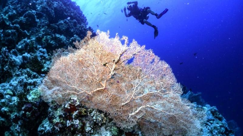 The UN's intergovernmental panel on climate change warned last year that just 1.5 Celsius (2.7 Fahrenheit) of global warming could see 70-90 per cent of Earth's coral reefs vanish. (Photo: AFP)