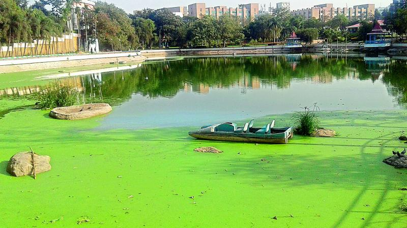 Hospital tests blamed toxic algae, a rising threat to US waters.
