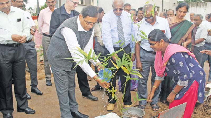 Oxygen park with bema bamboo established at the Department of Agronomy, Tamil Nadu Agricultural University, Coimbatore on Saturday.	 (DC)