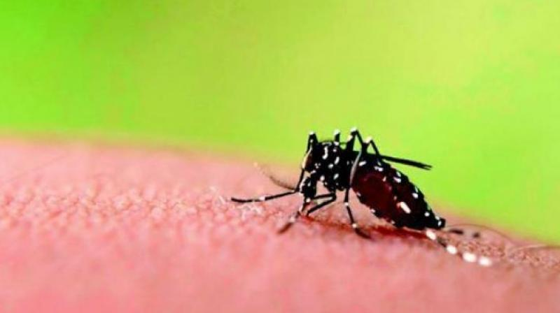 In clinical studies carried out in Hyderabad, Bengaluru, Delhi and Mumbai, a delay of 7 to 9 days has been recorded in diagnosing dengue in these patients. (Representational image)