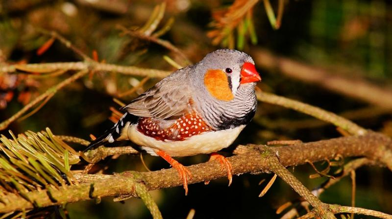 Traffic noise makes birds age faster: Study