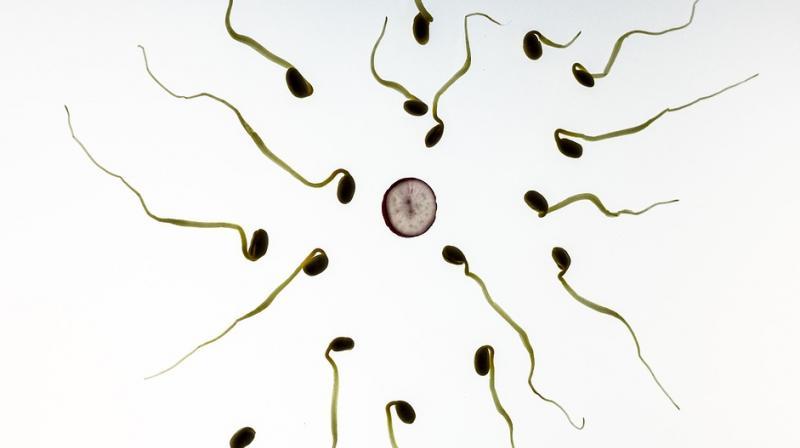 Tight Fitting Underwear May Inhibit Sperm Production