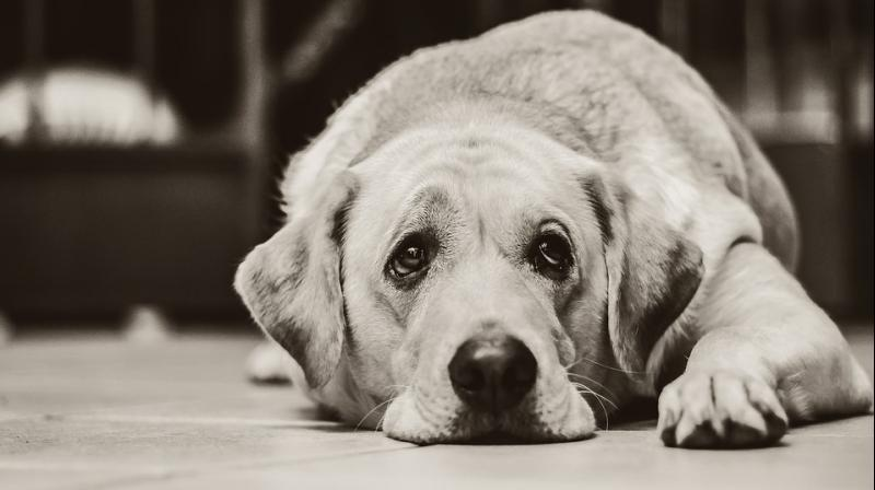 Raveena Tandon, Richa Chadda and others speak about ways to make your pet feel safe during the festival of lights. (Photo: Pixabay)