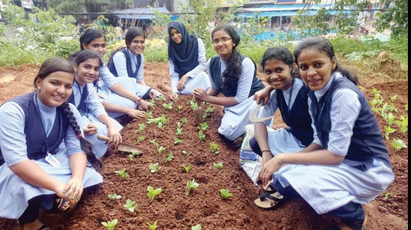 Studenta at their farm in Government Vocational Higher Secondary School , Kunnamkulam, Thrissur.