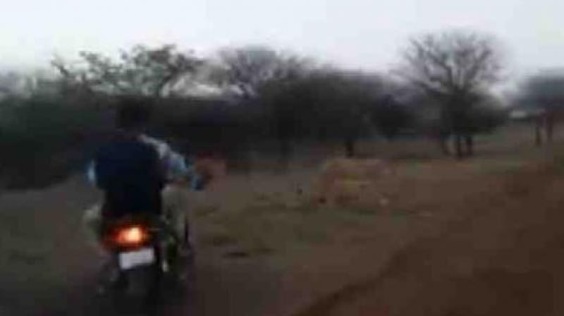 The licence plate for one of the bikes can be seen. The lions run frantically to escape the interlopers. (Screengrab)