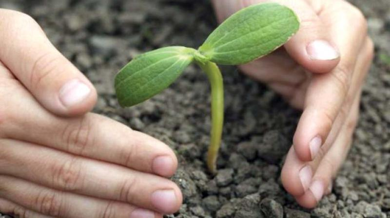 The 'Haritha Keralam' project alone has set an ambitious target of distributing three crore saplings in 2018.