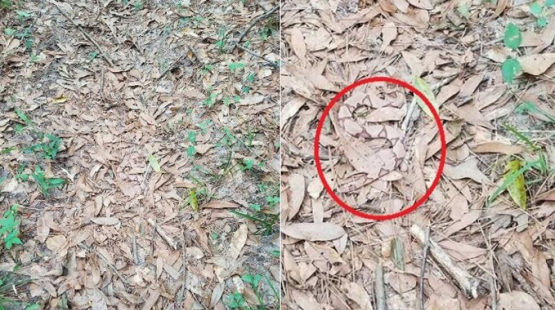 Twitter user Helen posted the photo after it was sent to her by a 'HER-per' and she asked people to spot the snake. (Photo: Twitter/Helen)