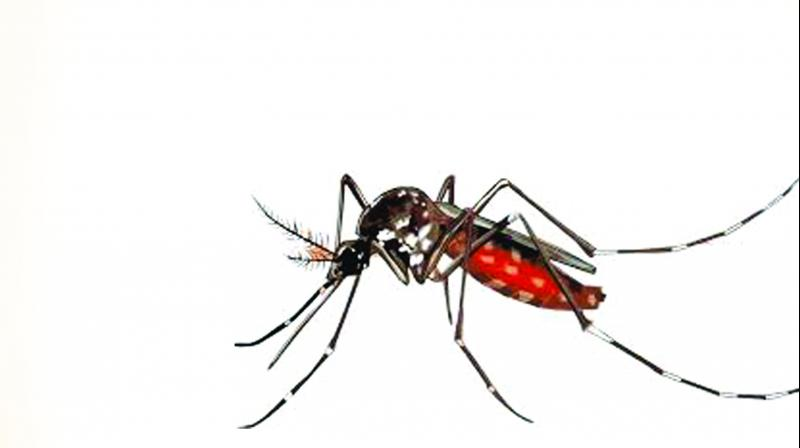 The Ig chikungunia blood test will be carried out to if the fever and pain do not subside in two or three days.