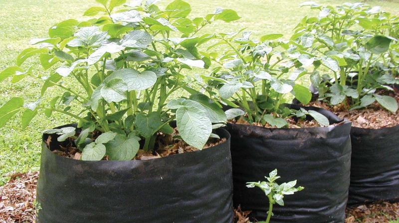 農務部、地方廷、野菜・猿振興協議会、自治会展示がありに食品袋を販売しる。