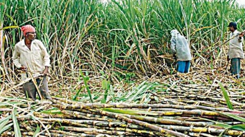 The FRP is the minimum price that sugarcane farmers are legally guaranteed.