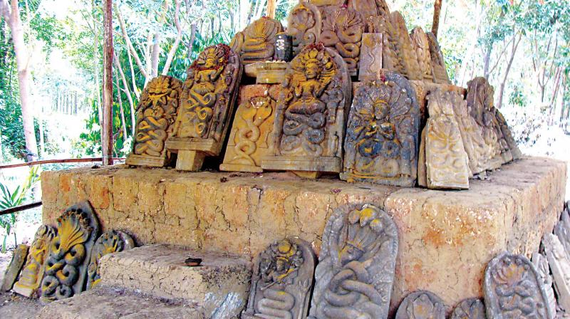 People agree that the place had an apt name- 'Sahasra Nagabana,' which means abode of the snake god with thousands of snakes!
