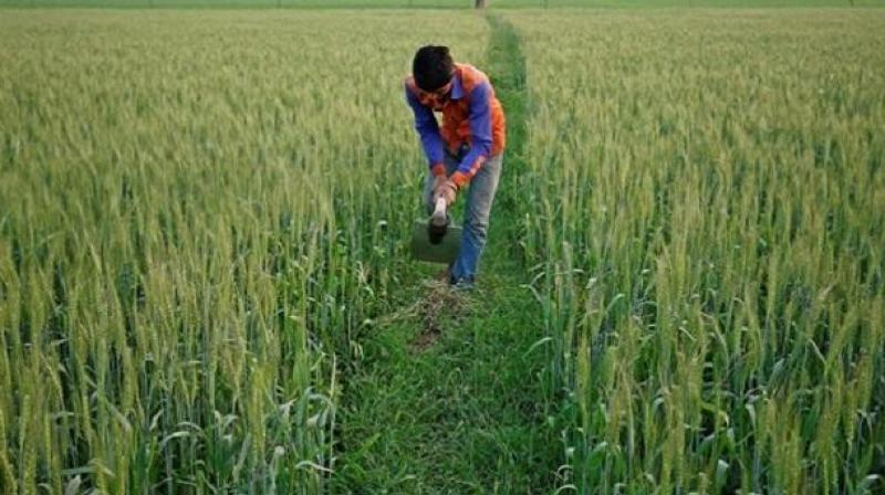 J&K among regions to get highest rainfall from June to Sept: IMD