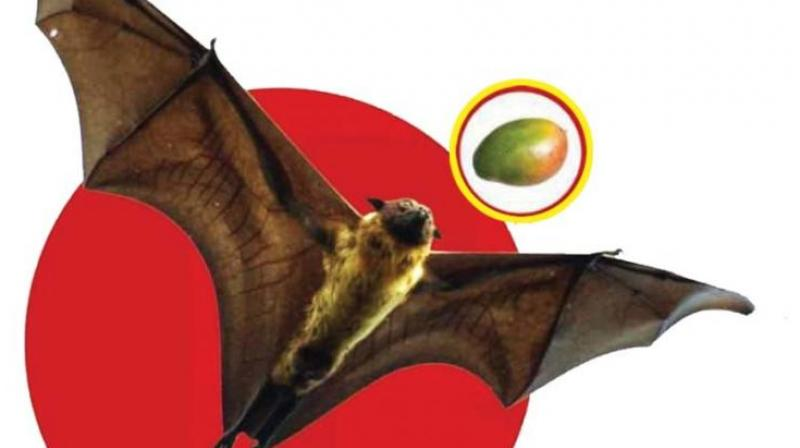 one of the samples was from a techie 24 who had gone to kerala - Picture Of A Bat