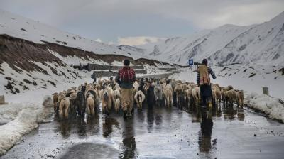 For generations, the Muslim Bakarwals have traveled between summer pastures in the Himalayas and winter grazing grounds in the lowland plains, herding their goats, sheep and horses. (Photos: AP)