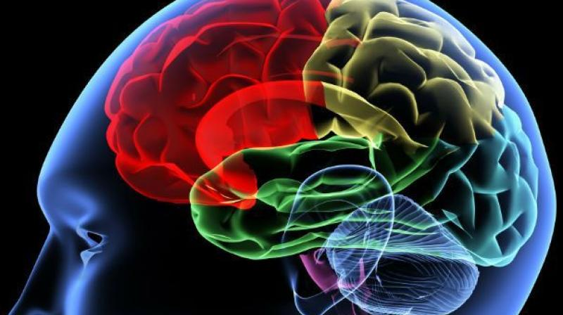 Elevated levels of the brain protein tau following a sport-related concussion are associated with a longer recovery period and delayed return to play for athletes. (Representational Image)