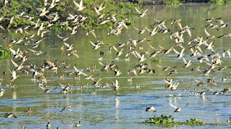 In total, about 14664 birds were counted at about 20 different locations in the region including at Manakudy, (Image: DC)