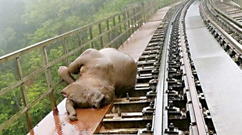 The forest officials have reason to be concerned as in April 2016, four spotted deer too were run over by a train in Sakleshpur and an elephant crossing the tracks had a close call about a year ago.