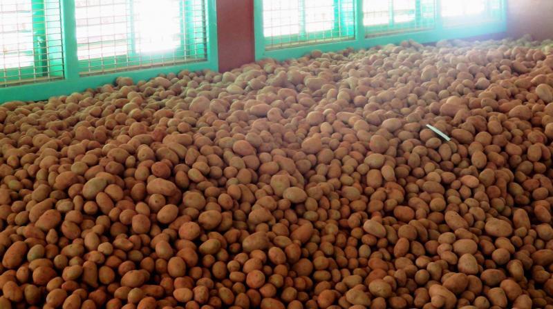 Nilgiris grown potatoes. (Photo: DC)