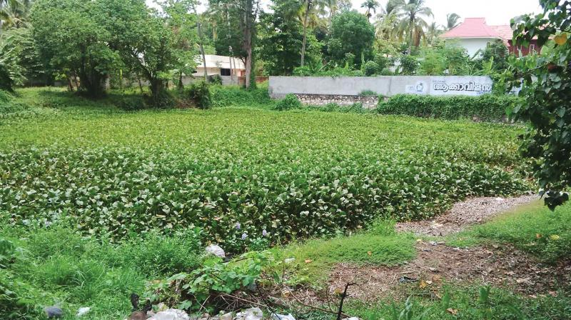 The abandoned pond filled with water hyacinth. (Photo: DC)