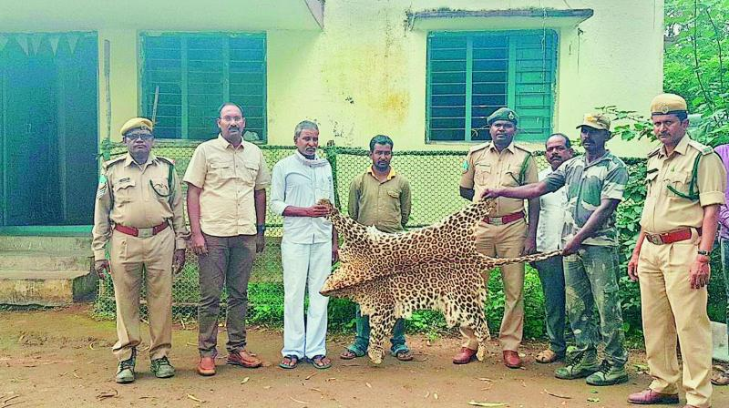 One leopard skin was seized from a house in Takiguda village, Adilabad District.