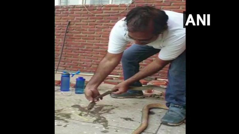 Sher Singh, an Income-Tax officer, on Saturday, saved the life of a snake, which had ventured into the premises of the school, where workers hit and poured pesticide over the reptile. (Photo: ANI)