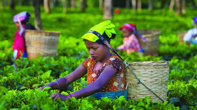 India's tea production in April again fell 4 per cent from a year earlier to 84.42 million kg, thanks to lower plucking in the north-eastern state of Assam, one of the top tea growing regions.