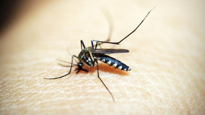 On Monday two chikungunya, nine dengue and three malaria cases were reported in the state capital. (Photo: Representational/Pixabay)