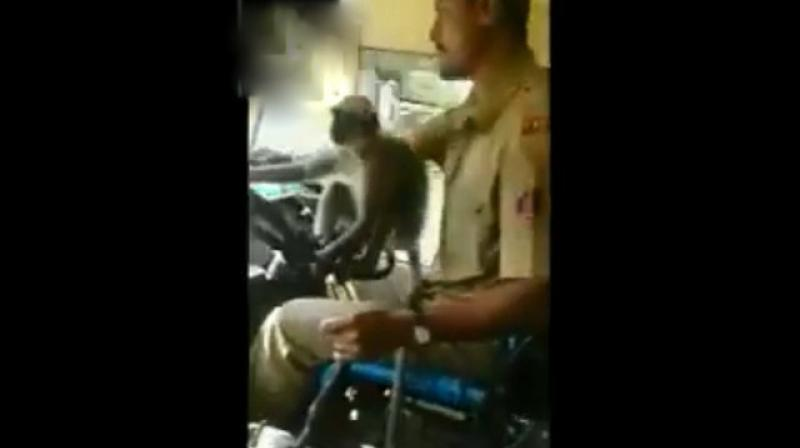 Video shows monkey 'driving' bus in India