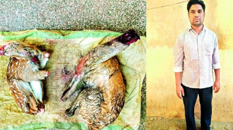 Syed Zameer was found possessing the carcasses of two deers.
