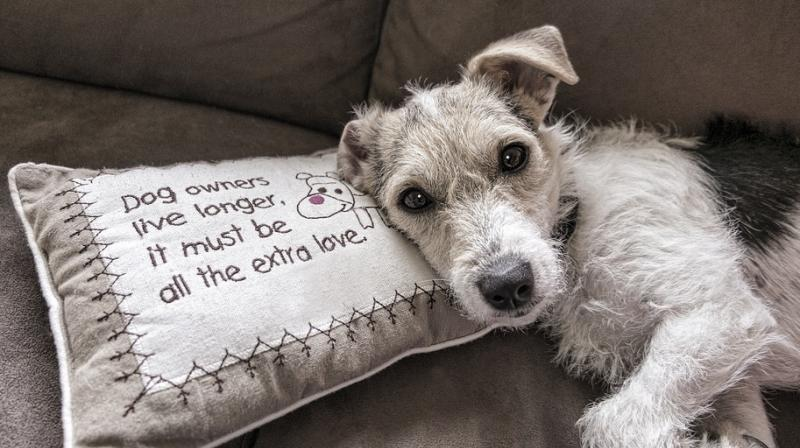 Pets can help people with mental health issues. (Photo: Pixabay)